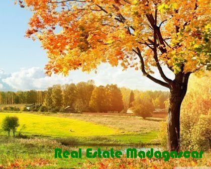 Madagascar New expatriate information